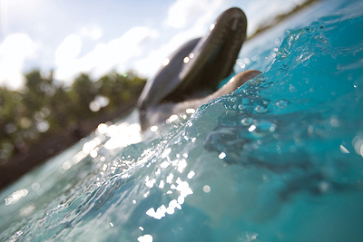 Dolphin Encounter on Blue Lagoon Island