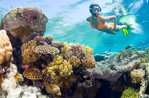 Ultimate Snorkeling Adventure