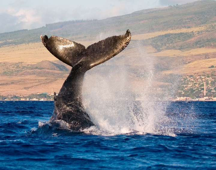 Whale Watching & Coastal Cruise