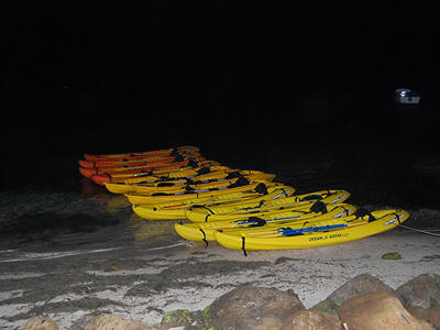 Bioluminescence Bay Kayak Tour